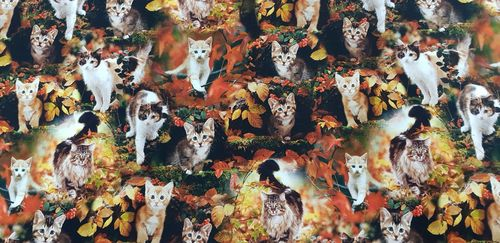 Digitale print Fall Kittens